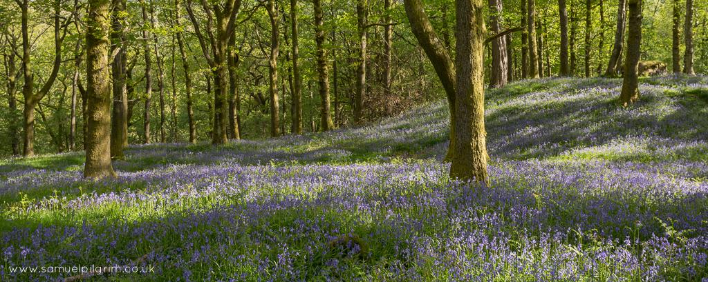 White Moss, Blue Bells