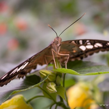 'Sensational Butterflies' at the Natural History Museum