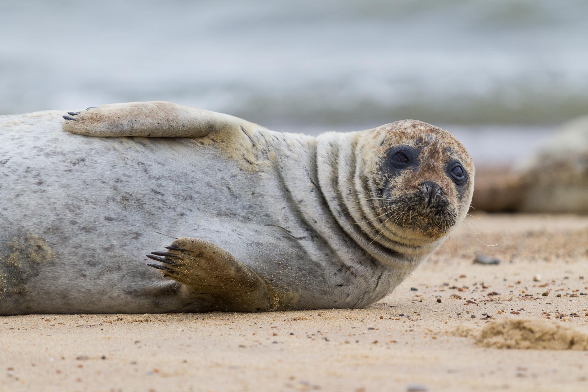 Norfolk Seal 10
