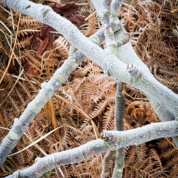 Sketches of what I see / Frost, Bracken, Wood