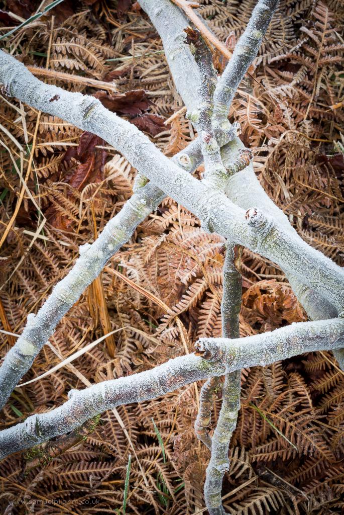 Frost, Bracken, Wood