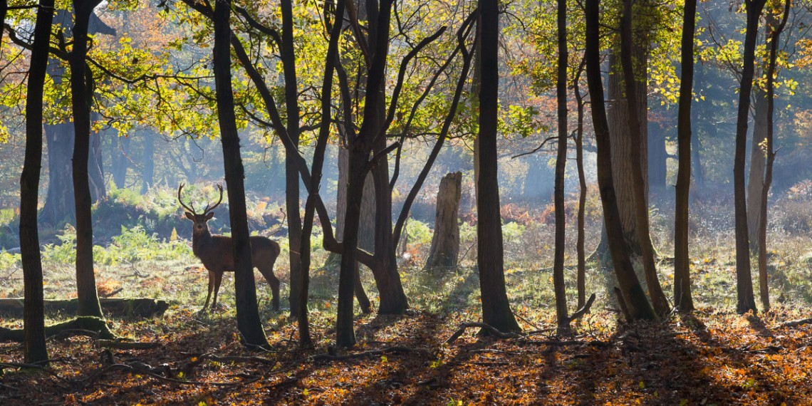 A Woodland Encounter