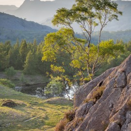 A Portrait of Holme Fell