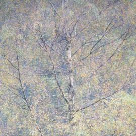 Yew Tree Study #2